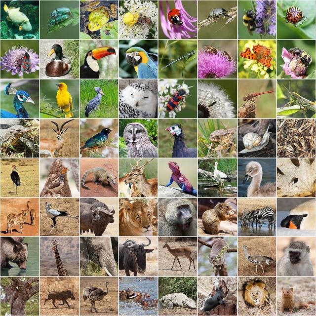 Colagem de vários animais