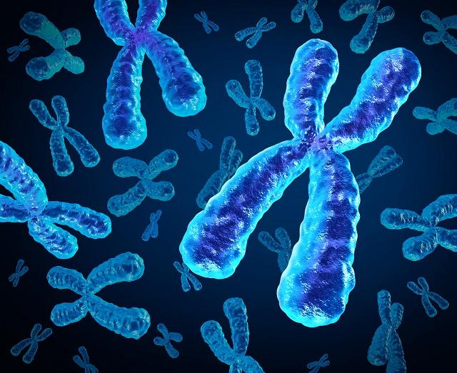 Vários cromossomos