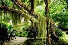 reino-plantae-classificacao-e-caracteristicas-dos-vegetais