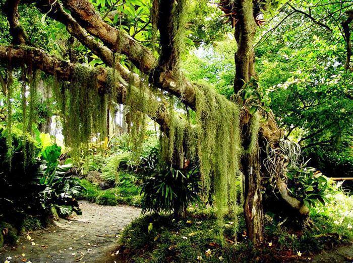 Reino Plantae - Classificação e características dos vegetais