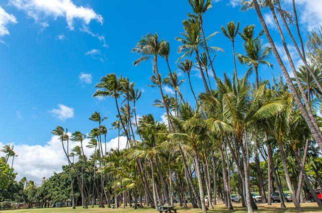 Clima tropical - Vegetação