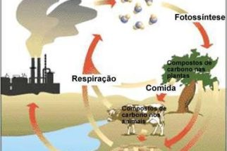 Ciclo do Carbono
