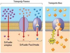 Transporte passivo e transporte ativo