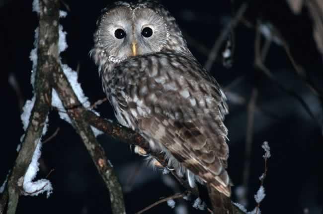 Animais noturnos - Características do morcego, coruja e mais animais!