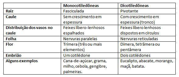 angiospermas-tabela