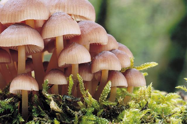 Os organismos do Reino Fungi se desenvolvem em ambientes úmidos