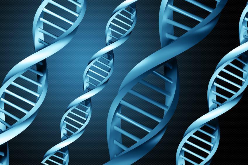 DNA - Cromossomos, genes, genoma e RNA