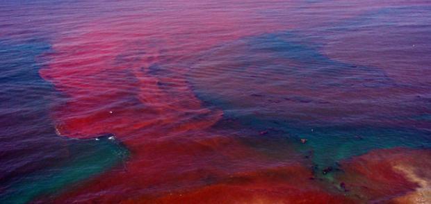 Maré vermelha – Como se dá esse fenômeno?
