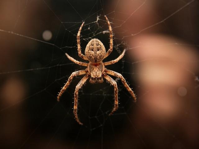 Aranha em teia