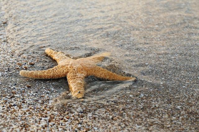 Estrela-do-mar em praia