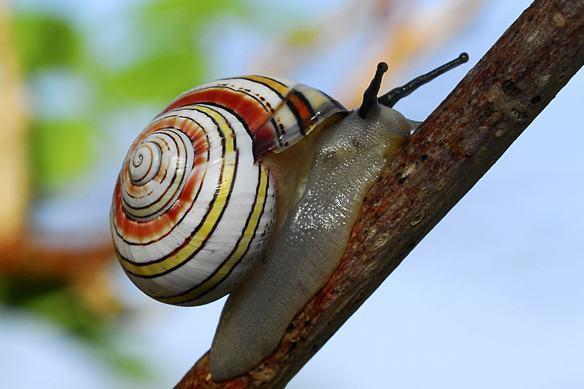 Animais invertebrados - Características, habitat e os principais