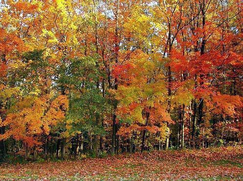 Biomas terrestres