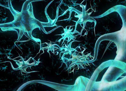 Tecido Nervoso - Neurônios, tipos de neurônios e neuróglia