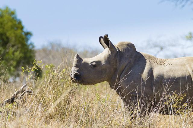 As expedições nas Savanas são possibilidades singulares para o contato com animais nativos