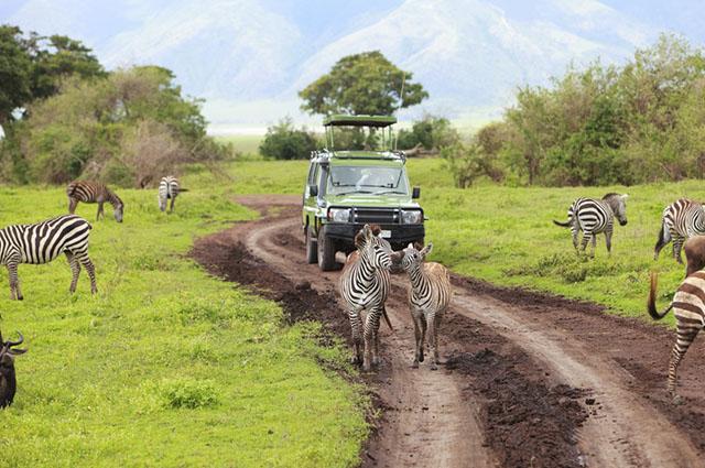 Uma das atividades mais comuns nas Savanas é a realização dos safáris na África