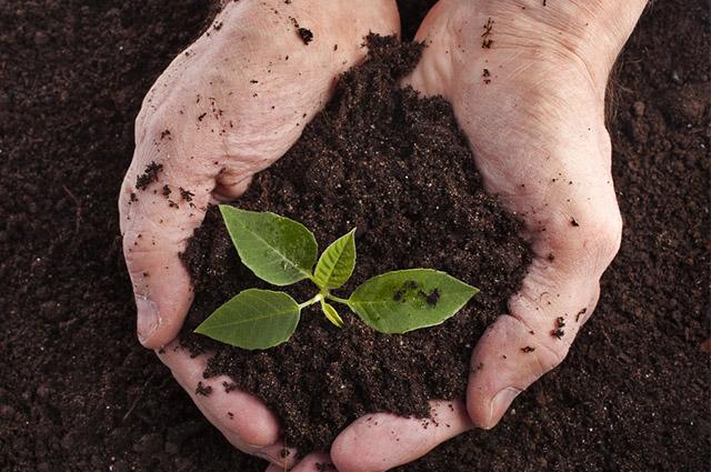 O solo pode ser caracterizado como material mineral ou orgânico