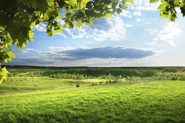 Sua vegetação é predominante de formações rasteiras ou herbáceas