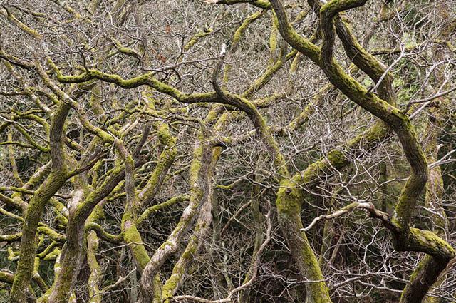 No Cerrado a vegetação se torna mais densa e expressiva