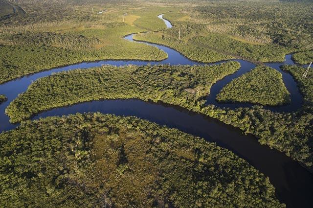 As regiões de Clima Equatorial possuem uma enorme biodiversidade