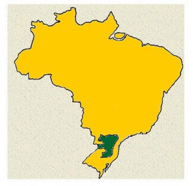 A araucária é a árvore símbolo do estado do Paraná