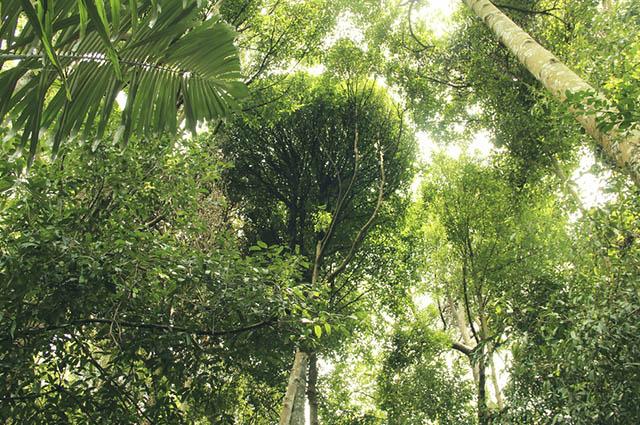 A Mata Atlântica é um bioma bastante devastado no território brasileiro