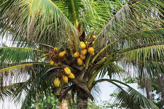 A Mata dos Cocais é uma zona de transição entre biomas