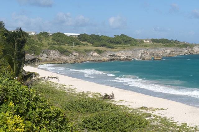 A restinga é uma vegetação costeira escassa que cobre a área arenosa