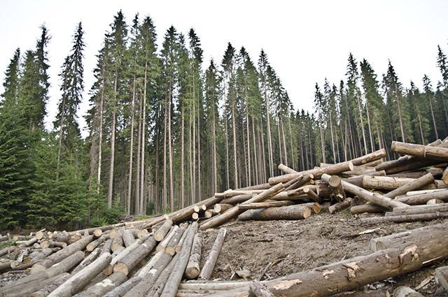 O desmatamento foi uma das formas utilizadas pelos produtores para geração de áreas de pastagens