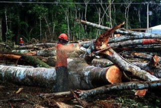 Desmatamento no Brasil