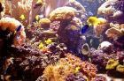 recifes-de-corais-distribuicao-pelo-mundo-e-biodiversidade