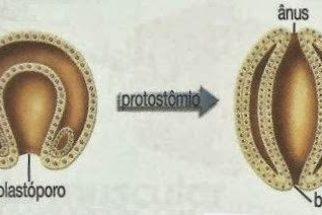 Protostômios