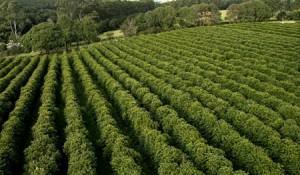 plantation-definicao-sistemas-agricolas-caracteristicas-e-economia