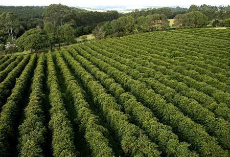 Plantation - Definição, sistemas agrícolas, características e economia