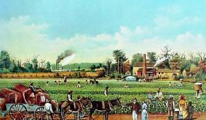plantation-o-sistema-local-de-pratica-caracteristicas-e-na-economia