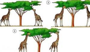 evolucao-das-especies-teorias-antigas-lamarck-e-darwin
