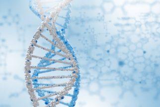 Mutação: o que é, tipos e quando ocorre