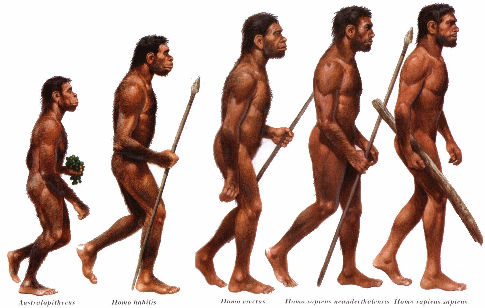 Resultado de imagem para homosapiens