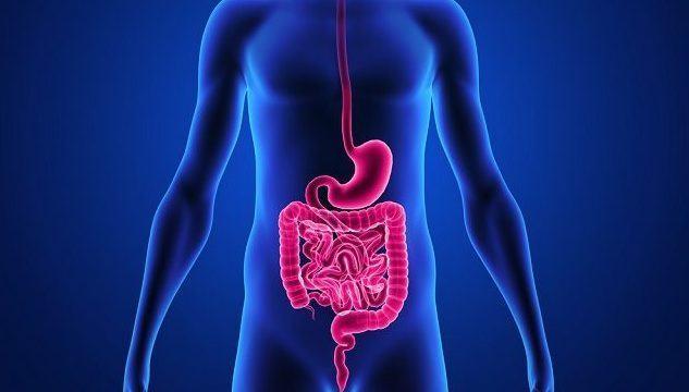 Saiba a diferença entre os dois tipos de digestão - Estudo Prático
