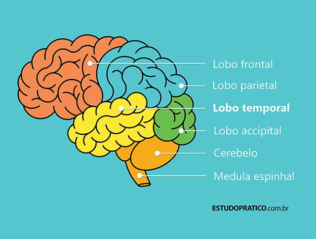 Imagem do cérebro