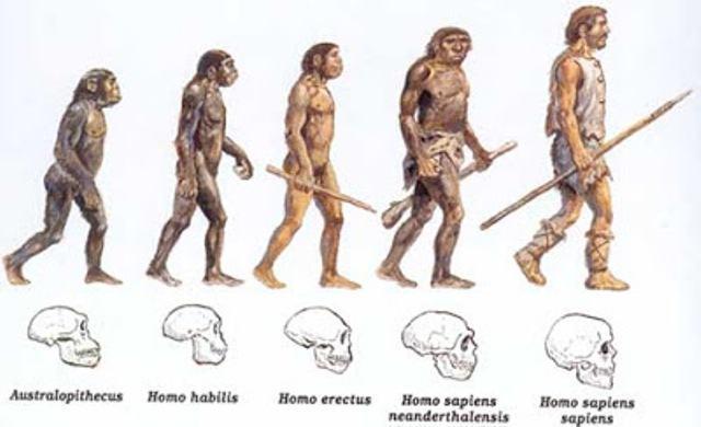 biologia-evolutiva