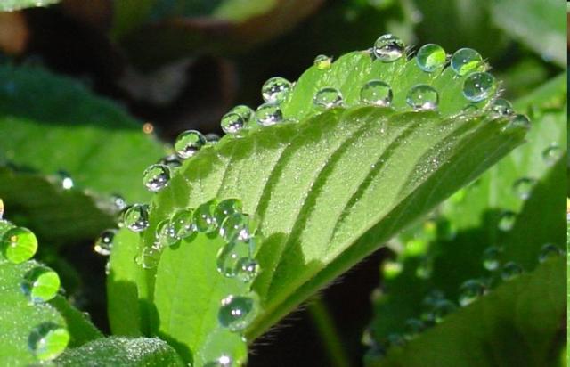 Coesão e adesão da água