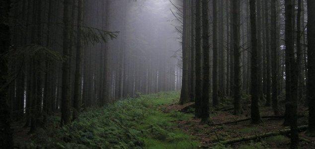 Floresta Hoia-Baciu