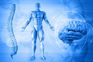Cerca de 1 trilhão de criaturas habitam o corpo humano