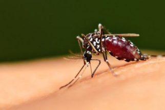 Dengue: um problema mundial
