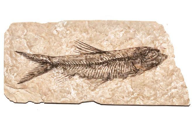 Fossilização