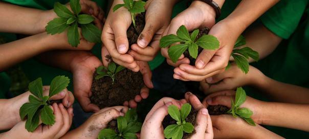 Sustentabilidade nas escolas