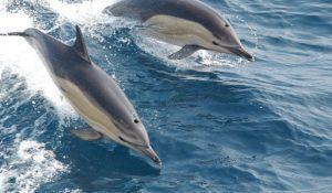 imagem-de-golfinhos-em-alto-mar