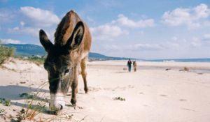 burros on beach near tarifa andalucia spain