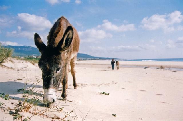 Qual a diferença entre jumento, jegue, asno, mula e burro