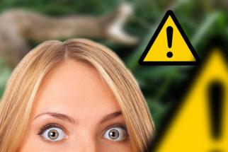 Conheça o animal terrestre mais perigoso do Planeta